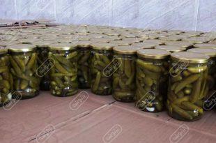 مرکز تولید خیارشور در ایران