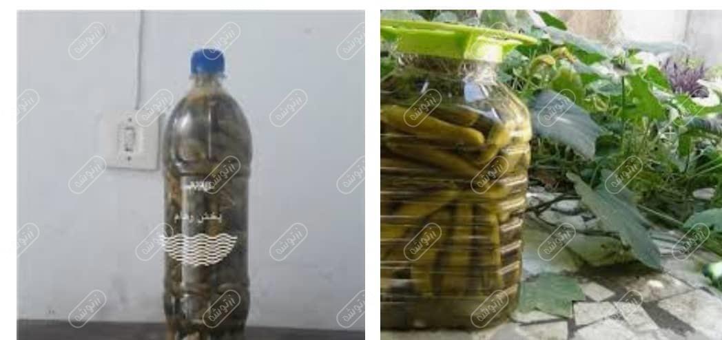 خرید خیارشور البرز